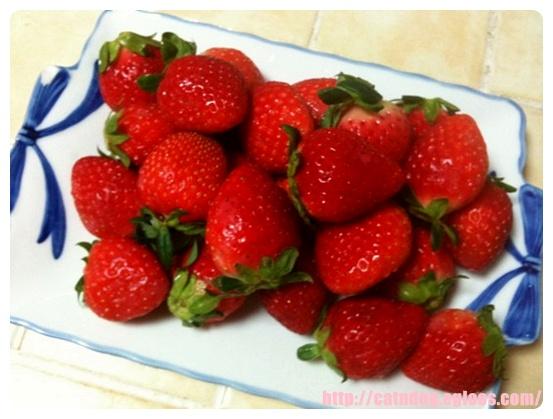 딸기가 좋아..딸기가 좋아..