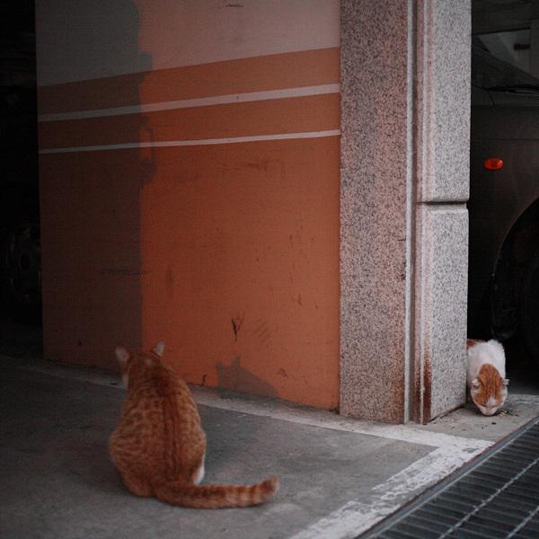 고양이는고양이다 #242