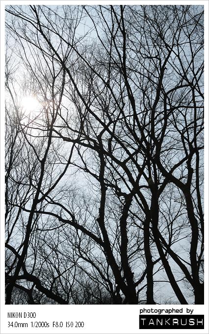 110313 나무