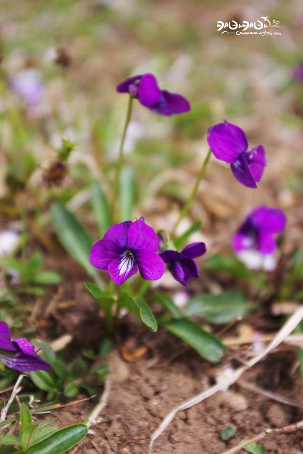 제비꽃, 민들레 그리고 꿀벌