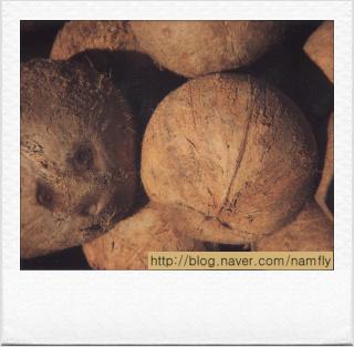 얼굴 닮은 망고가 아니고, 코코넛