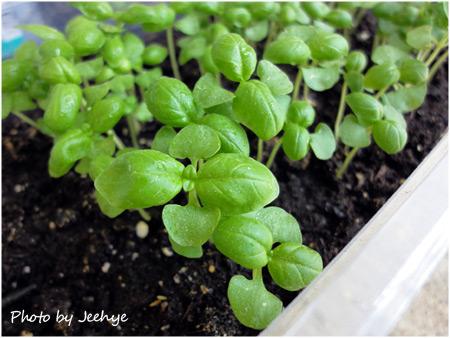 초록잎사귀+채소씨뿌리기