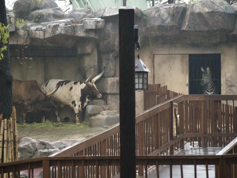 [2011년 4월 30일]비오는 날 어린이대공원에서