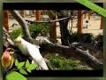 요술공주 밍키란 왕관앵무새를 아시나요?