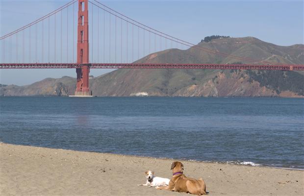 샌 프란시스코, 애완동물 매매 금지를 고려 중