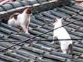 지붕위 한 편의 드라마