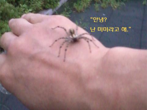 거미의 건설 현장 - 3. 재빠른 들풀거미 '미미'