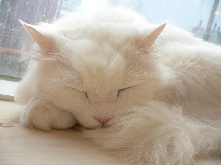 강남역 고양이카페 양이양이