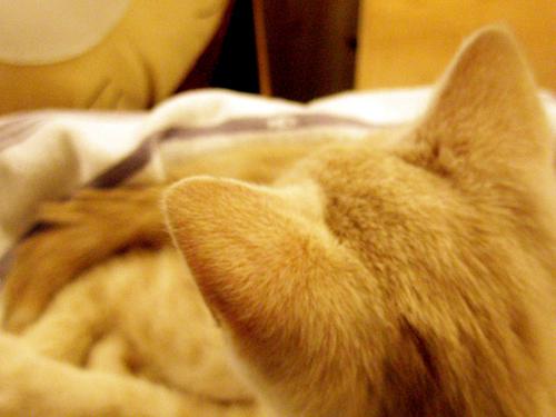 [주안] 꿈꾸는 고양이