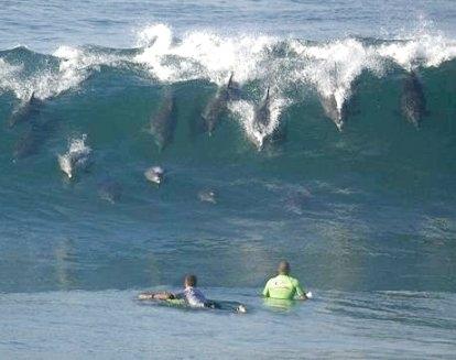 서핑을 즐기다 흔하게 생길 수 있는 아찔한 순간ㅋ