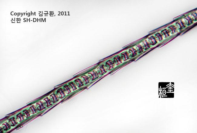모피의 제왕, 밍크털  (현미경 관찰)