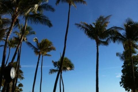하와이 여행 둘째날