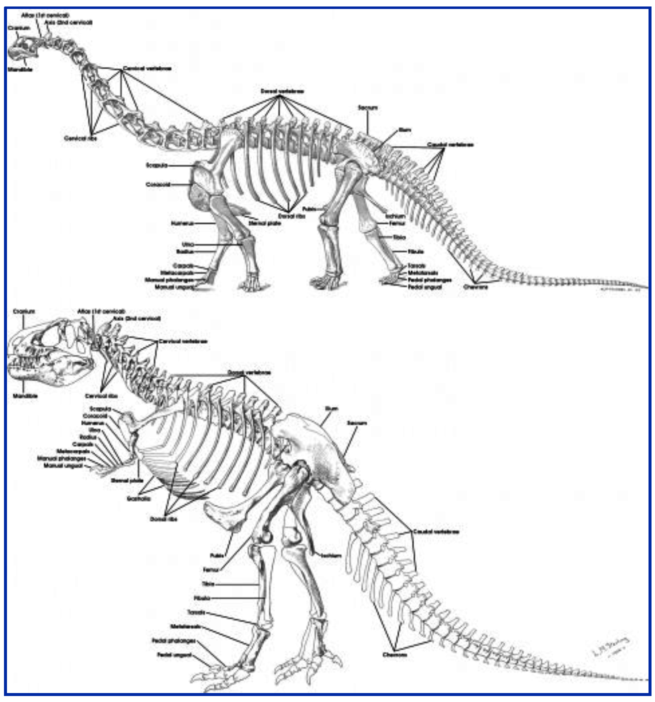 쥬라기에 용각류는 초식공룡이 아니다.