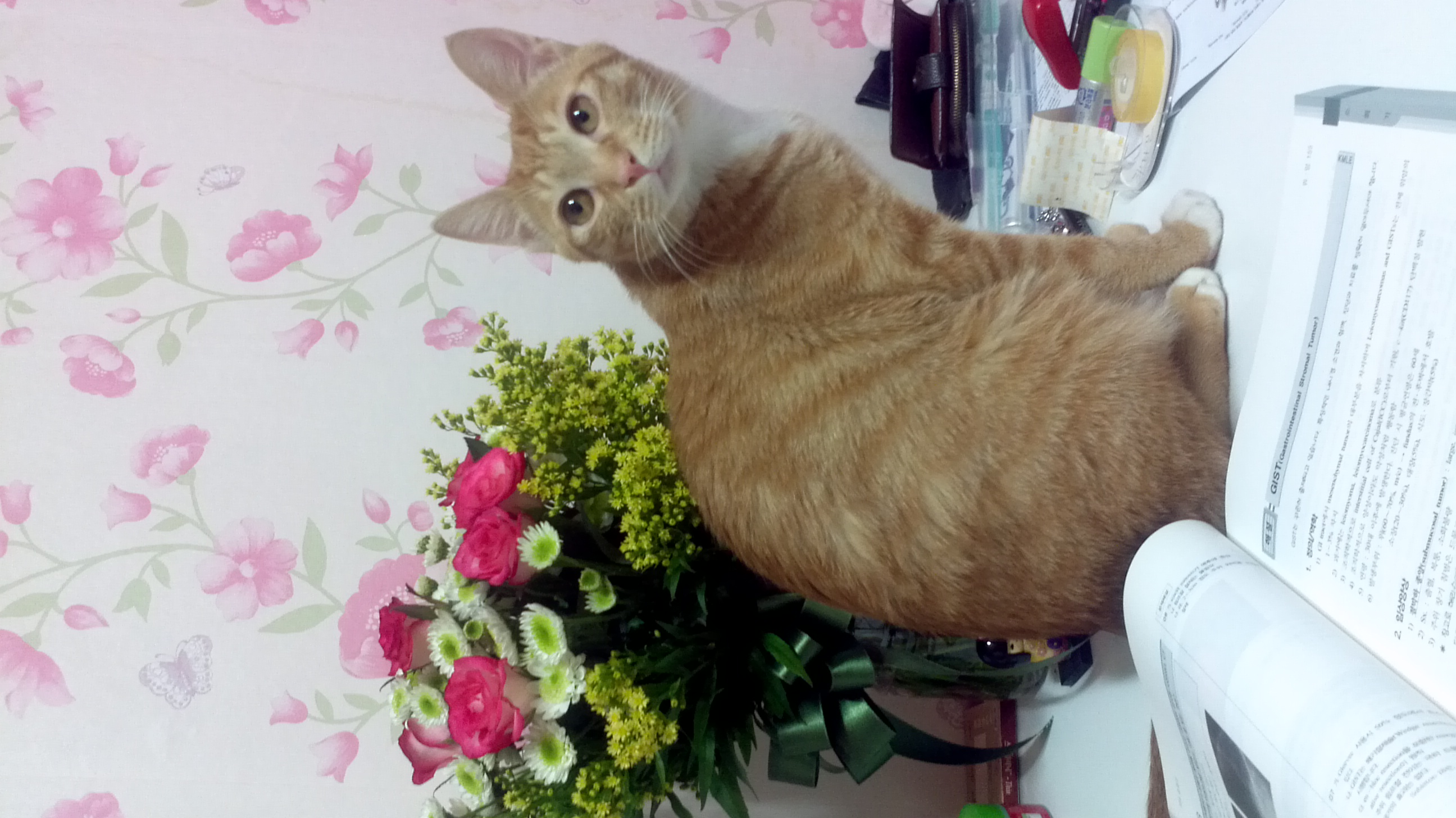 꽃과고양이와맥주
