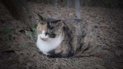 길고양이 삼색이