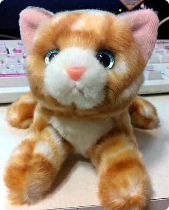 고양이~ 고양이~ 세상에서 가장 귀여운 고양이~