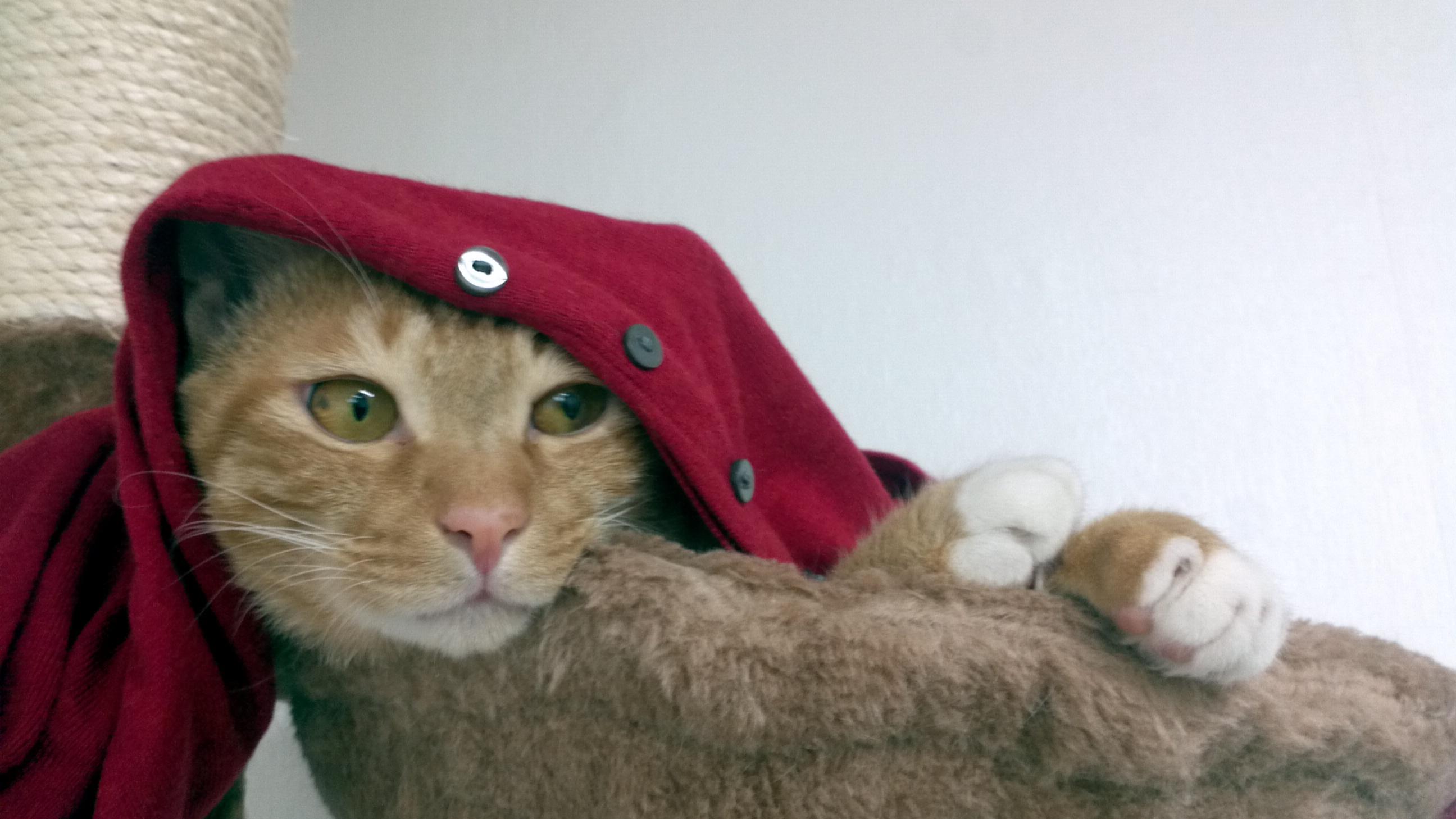 빨강이 잘 어울리는 고양이