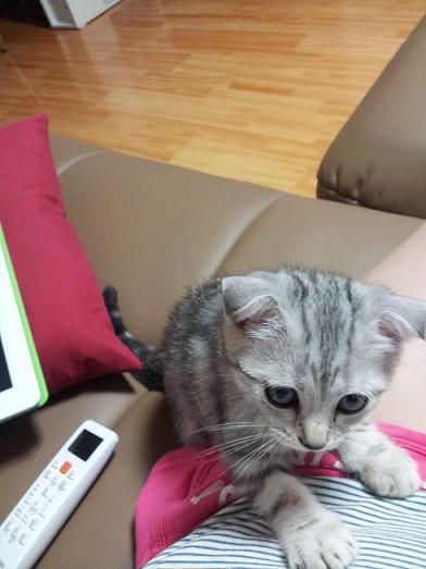 식탐 고양이